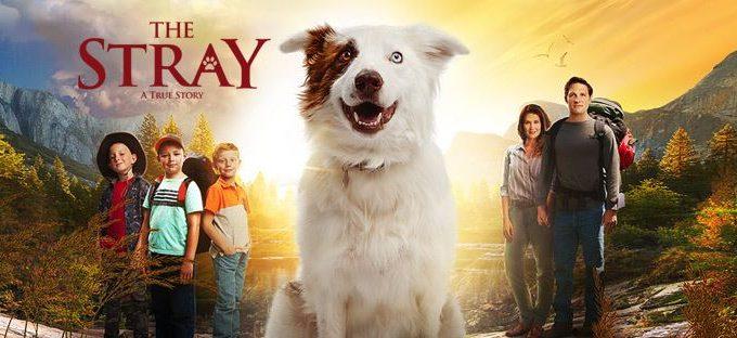The Stray – A True Story {Movie Review}